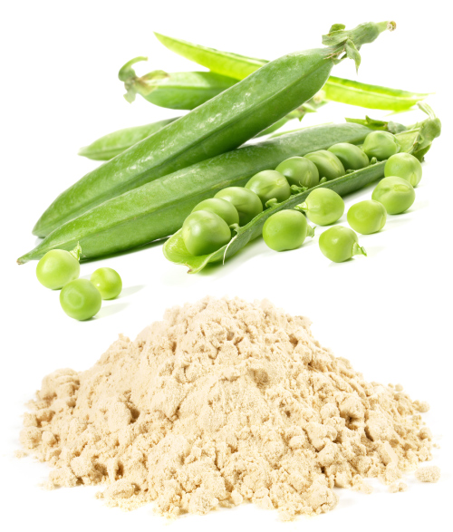 pea protein is one plant-based alternative to meat and dairy protein sources